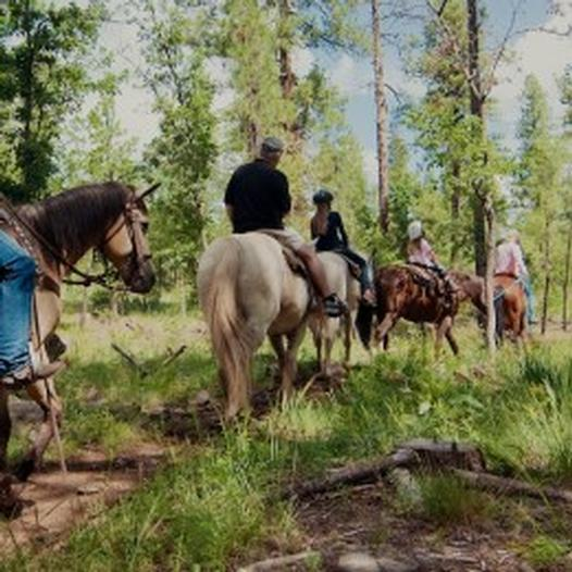 horseback riding in the coconino national forest